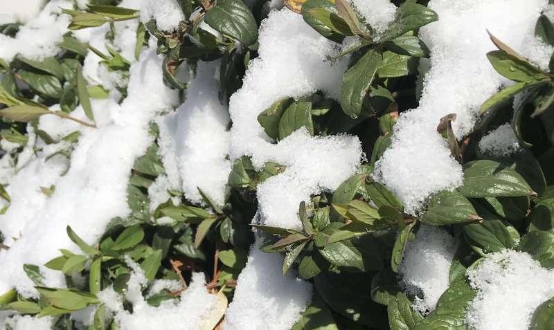 ilkbahar-da-kar-surprizi-iste-hava-raporu